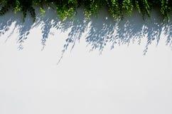 Fond blanc de tache floue avec l'ombre d'herbe Photographie stock