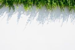 Fond blanc de tache floue avec la silhouette de fleur Photographie stock libre de droits