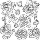 fond blanc de vecteur et roses noires et blanches Photo libre de droits