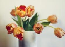 fond blanc en gros plan de tulipe de fleur de bouquet Images libres de droits