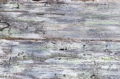 Fond blanc et bleu de texture peinte sur en bois superficiel par les agents Photo libre de droits