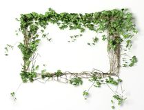 Fond blanc floral de trame Photos libres de droits