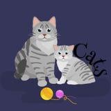 Fond blanc se reposant de chat et de chaton de mère d'animaux familiers, animaux domestiques Photo stock