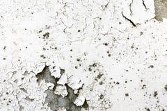 Fond blanc superficiel par les agents sale et vieux de texture de mur avec la peinture d'épluchage Photographie stock