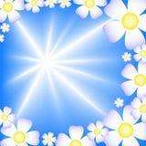 fond bleu abstrait avec les fleurs blanches Photographie stock