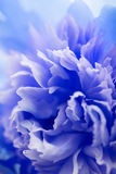 Fond bleu abstrait de fleur Photographie stock