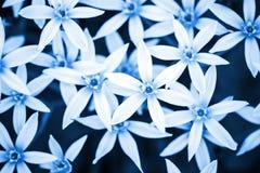 Fond bleu abstrait de nature avec les fleurs blanches Photographie stock libre de droits