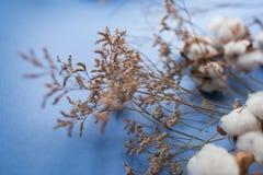 Fond bleu avec la branche de l'usine de coton Photos libres de droits