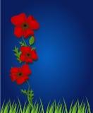 Fond bleu avec les mauvaises herbes rouges Images libres de droits