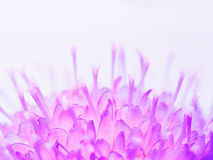 Fond bleu de fleur Image libre de droits