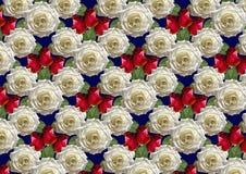 Fond bleu de grandes roses blanches de bouquet et de bourgeons rouges Photos stock