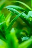 Fond botanique de plan rapproché de source Images libres de droits