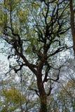 Fond branchu de ciel bleu d'arbre Photo libre de droits