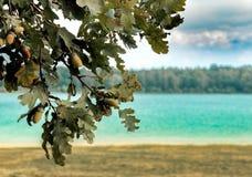 Fond brouillé avec un paysage estival de lac et un arbre automnal avec des glands dans le premier plan pointu photos stock