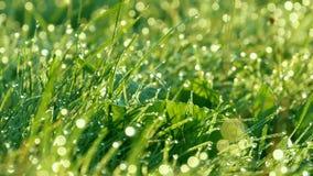 Fond brouillé d'herbe verte avec les baisses de l'eau et fin de rosée de matin vers le haut de vue banque de vidéos