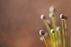 Fond brouillé de fleur d'herbe Photo stock
