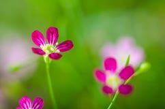 Fond brouillé de fleur, fond abstrait de tache floue photo libre de droits