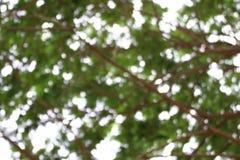 Fond brouillé de forêt d'arbre, usine verte molle de fond de bokeh abstrait de nature, fond frais de texture d'arbre d'été Photos stock