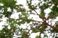 Fond brouillé de forêt d'arbre, usine verte molle de fond de bokeh abstrait de nature, fond frais de texture d'arbre d'été Photos libres de droits
