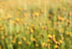 Fond brouillé de nature Photos libres de droits