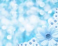 Fond brouillé par frontière florale, camomille de fleurs Photographie stock libre de droits