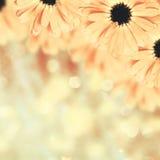 Fond brouillé par frontière florale scénique, fleurs Image libre de droits