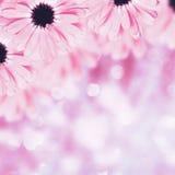Fond brouillé par frontière florale scénique, fleurs Photo stock