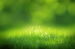 Fond brouillé par vert Images libres de droits