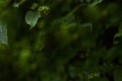 Fond brouillé par vert naturel foncé Photos stock