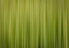 Fond brouillé par vert vertical de ressort Image stock