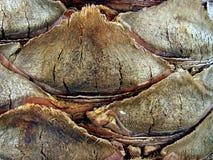 fond brun d'écorce Photo stock
