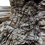 Fond brun de vintage de section criquée de vieille rétro texture en bois sèche Photos libres de droits