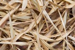 Fond brun sec de couleur de feuille en bambou Photographie stock