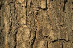 Fond brun texturisé d'écorce Photos libres de droits