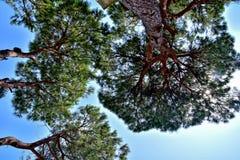 Fond calme d'été avec un ciel bleu sans nuages et des arbres verts images stock