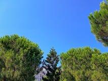 Fond calme d'été avec un ciel bleu sans nuages et des arbres verts photographie stock