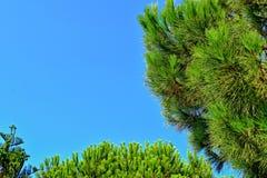 Fond calme d'été avec un ciel bleu sans nuages et des arbres verts images libres de droits