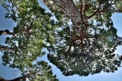 Fond calme d'été avec un ciel bleu sans nuages et des arbres verts image stock
