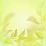 Fond clair abstrait d'été de ressort avec des feuilles Photographie stock libre de droits