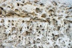 Fond clair de roche naturelle de pierre-SHELL images libres de droits