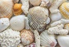 Fond clair des coquilles et du corail de mer Photographie stock