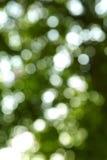 Fond clair et vert-foncé photographie stock