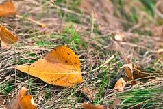Fond coloré avec la lame d'automne Photographie stock libre de droits