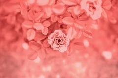Fond coloré brouillé par résumé avec des fleurs, roses image libre de droits