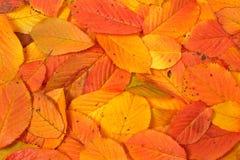 Fond coloré d'automne Image libre de droits