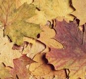 Fond coloré d'automne Photos stock