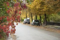Fond coloré d'automne avec des feuilles de Virginie-plante grimpante et des baies bleues dans le jour pluvieux Images stock