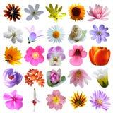 Fond coloré de collection de fleurs Image libre de droits