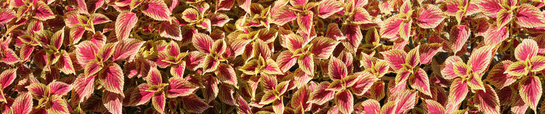 Fond coloré de fleur Photographie stock
