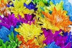 Fond coloré de fleur de marguerite Photos libres de droits